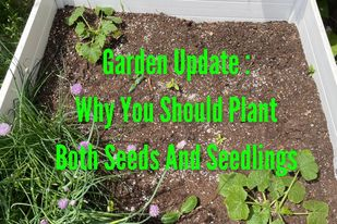 Why You Should Plant Both Seeds And Seedlings